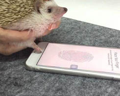 Your iPhone Can be Unlocked By A Hedgehog?