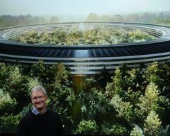 A Stroll Through Apple Park Reveals Green Landscape Progressing